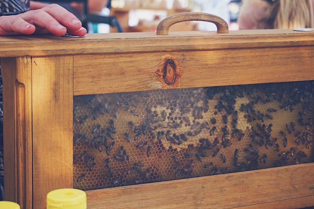 SFF bees.JPG
