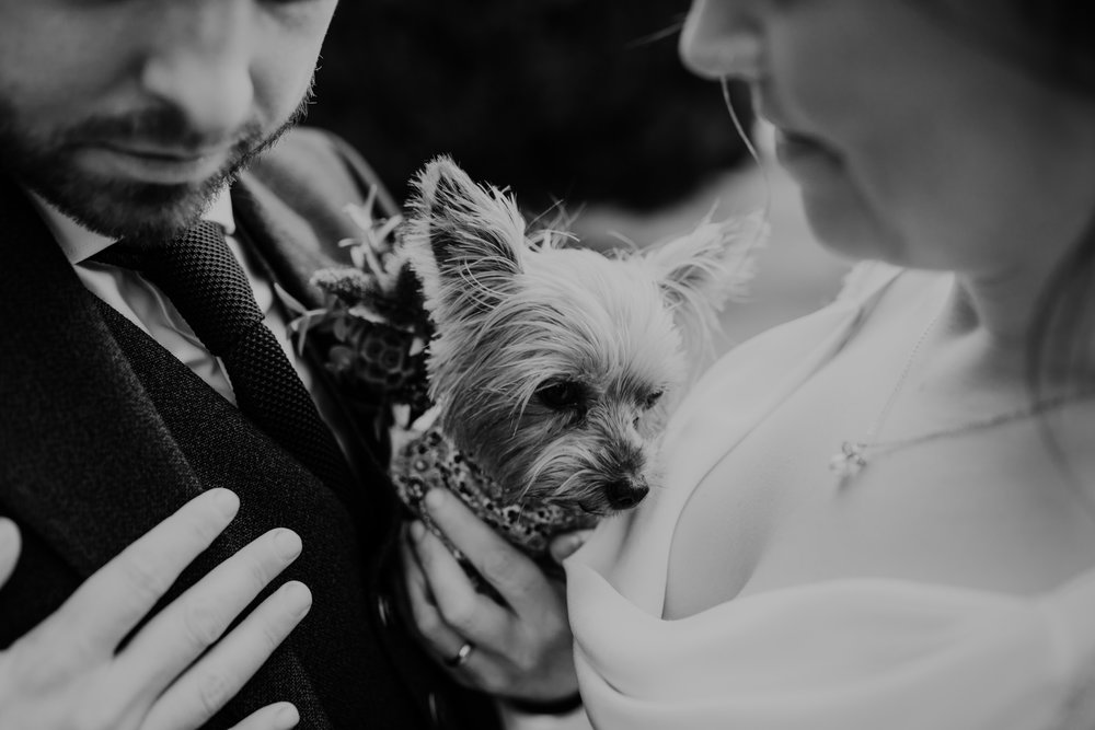 dog at  wedding at lissanoure castle