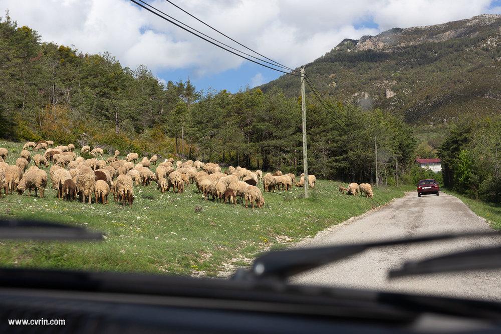 CastellaneFR_0518_11_0490_SQ.jpg