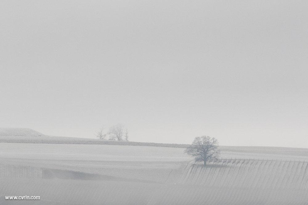 arnex_brouillard_neige_040217_4212.jpg