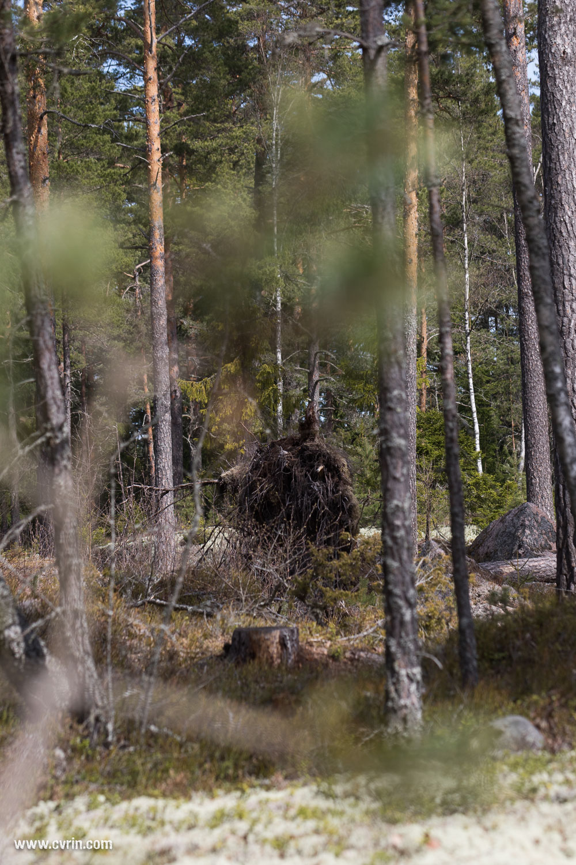 Une drôle de rencontre dans les bois le matin…
