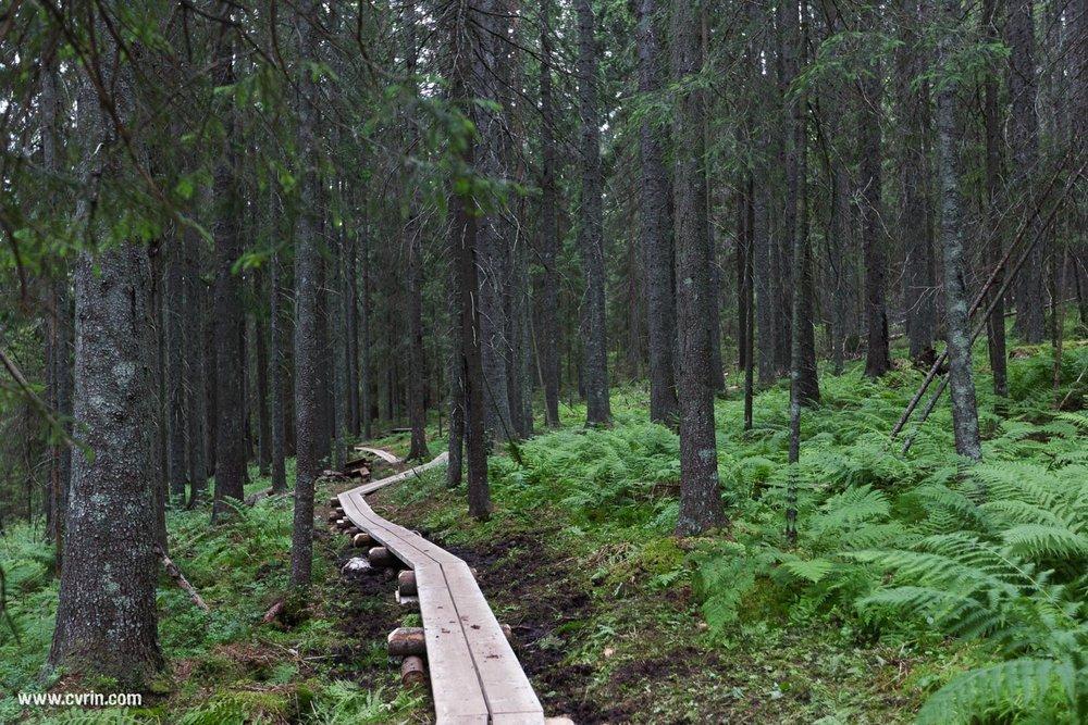 Parc national de Skuleskogen