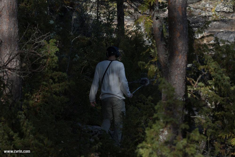 Voix radiophonique de reportage animalier: DaviS s'enfonce dans la forêt, à la recherche du son ultime… Le trouvera-t-il?  Sigma 100-400mm • Canon 7DMKII