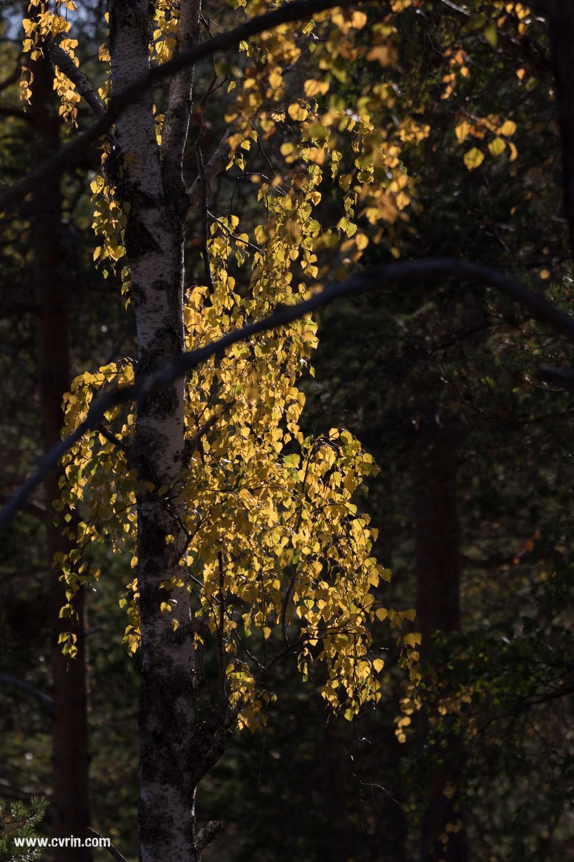 L'automne s'est bien installé!  Sigma 100-400mm • Canon 7DMKII