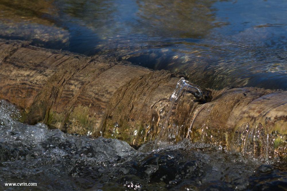 Tronc d'arbre immergé!  Sigma 100-400mm • Canon 7DMKII