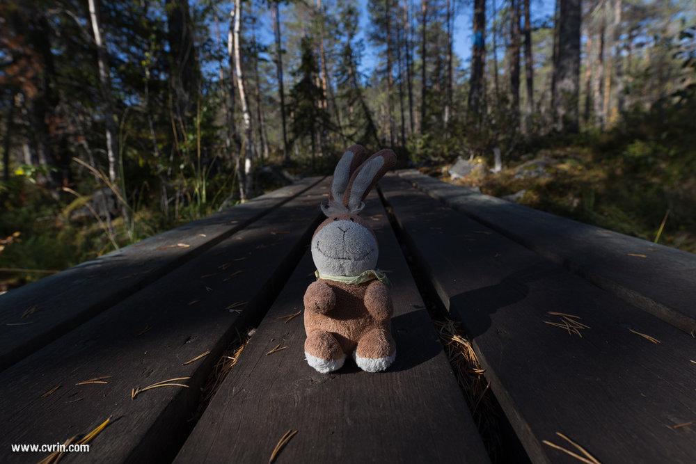 Pouky est toujours de la partie pour des vacances suédoises!  Sigma ART 20mm • Canon 6D