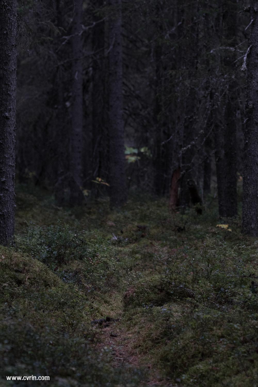 Un sous-bois digne d'un conte de fée…  Sigma 100-400mm • Canon 7DMKII