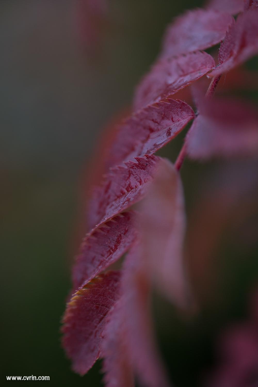 Ahhh les belles couleurs de l'automne, un régal à photographier!  Sigma ART 70mm Macro • Canon 6D
