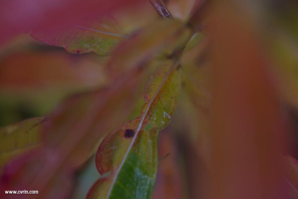 Un mélange étonnant de couleurs automnales…  Sigma ART 70mm Macro • Canon 6D