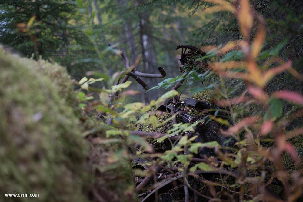 Urbex en forêt!  Sigma ART 70mm Macro • Canon 6D