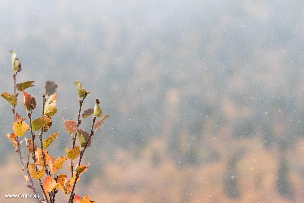 La neige en septembre, elle a juste un mois d'avance!  Sigma 100-400mm • Canon 7DMKII