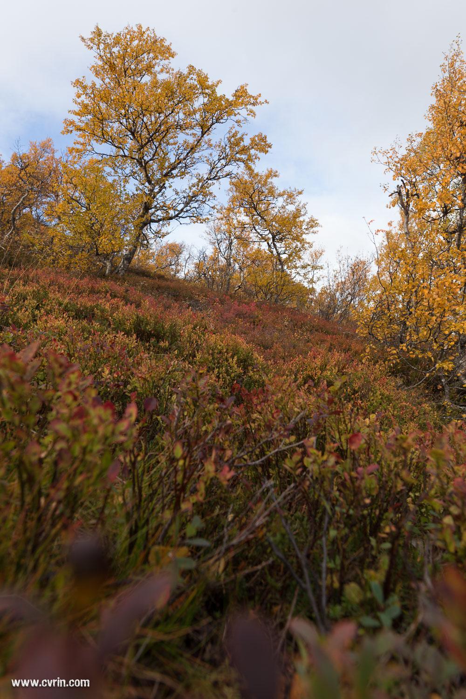 Au raz des pâquerettes, ou plutôt des buissons de baies!  Sigma ART 20mm • Canon 6D