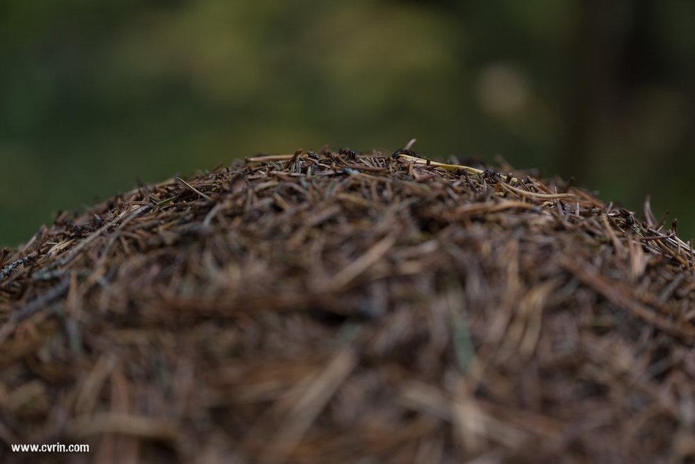 C'est le parc où nous avons vu le plus de fourmilières, un truc de fou! Il y en avait vraiment partout et pas des petites!  Sigma ART 70mm Macro • Canon 6D