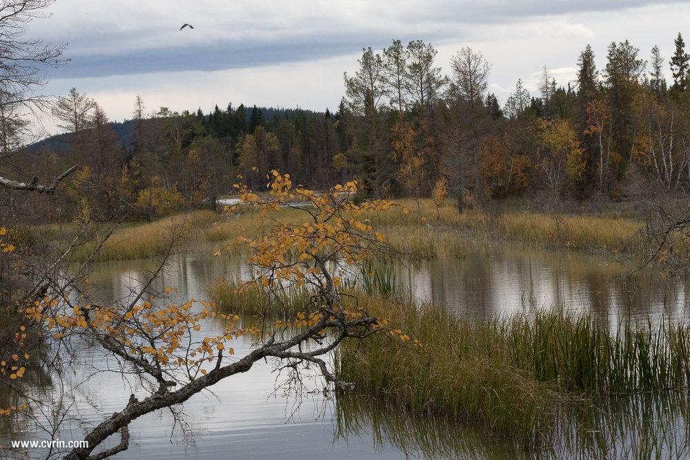 La magnifique réserve de Tysjöarna, entre lacs et forêts.  Sigma 100-400mm • Canon 7DMKII
