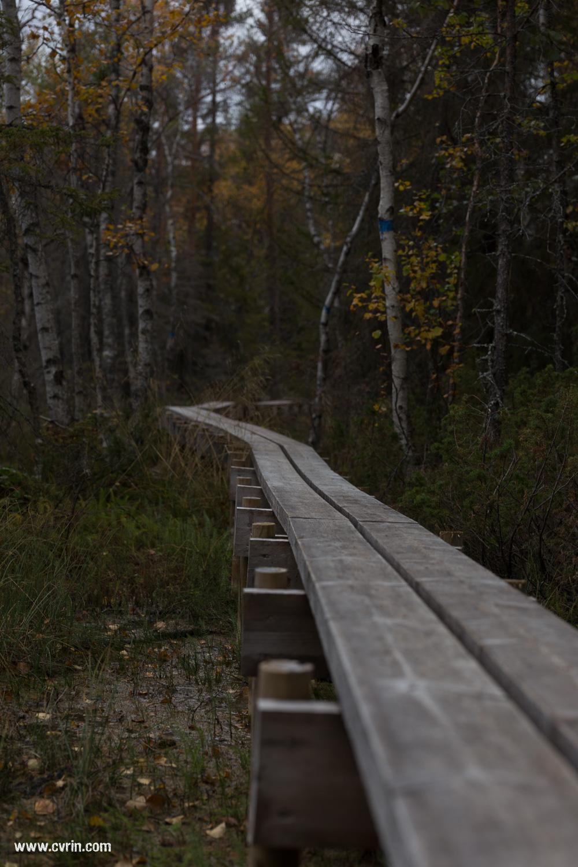 Les planches doubles que l'on trouve partout dans les parcs en Suède.  Sigma ART 70mm Macro • Canon 6D