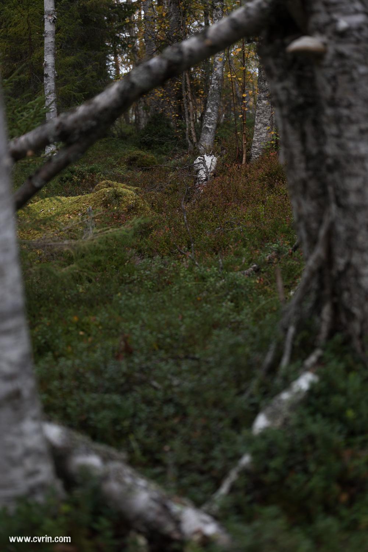 Les couleurs de l'automne représentées par les buissons de baies!  Sigma ART 70mm Macro • Canon 6D