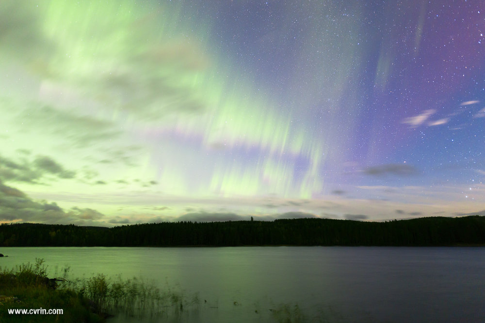 Lorsque le violet s'invite dans le vert… Magique!  Sigma ART 20mm • Canon 6D