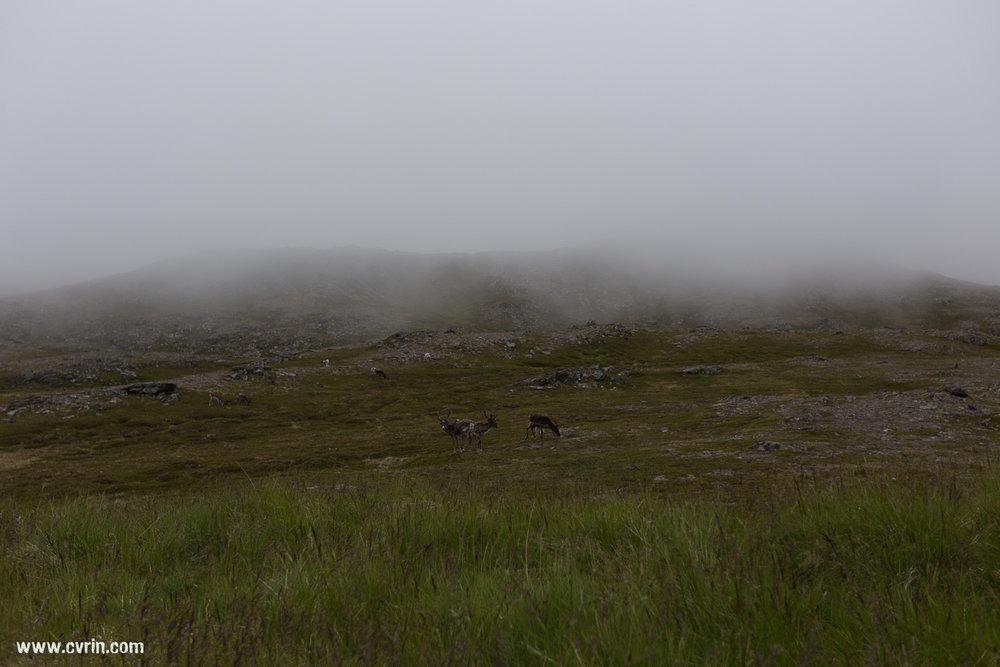 Les rennes qui se perdent dans le décors…
