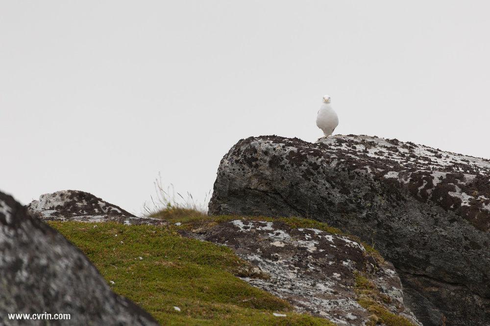 Surveillance du côté de Gjesvær.