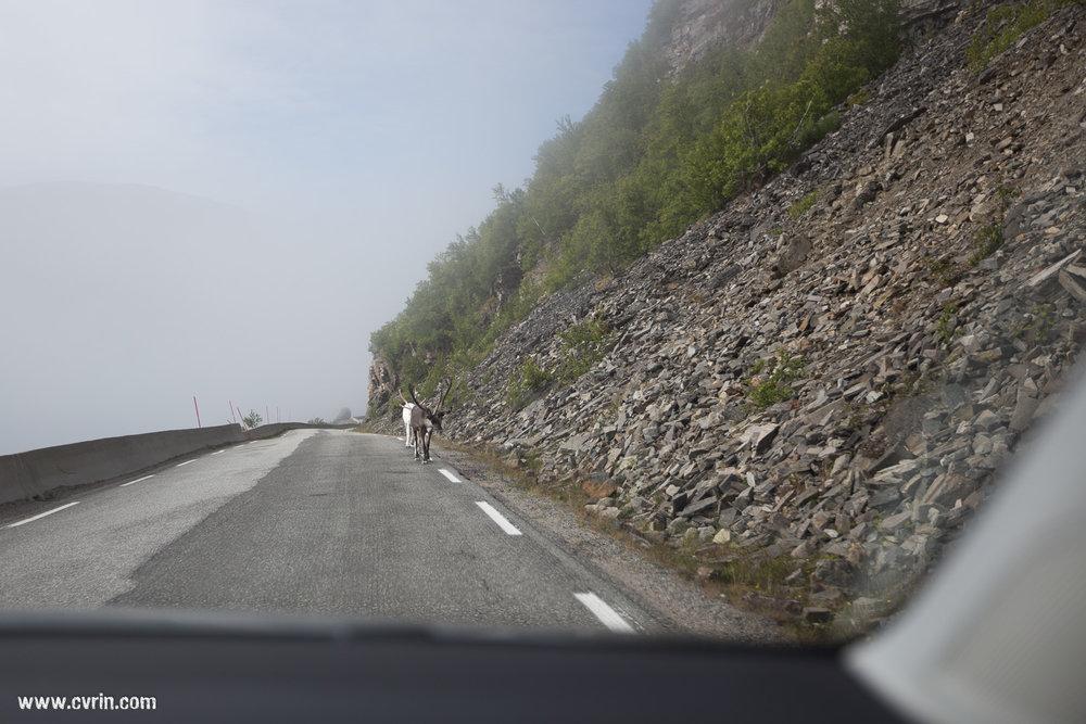 Le brouillard nous aura accompagné longtemps ce jour-là!
