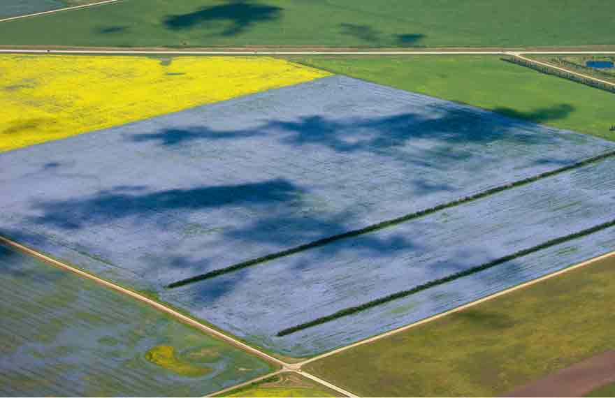 Aerial View of a flax field.