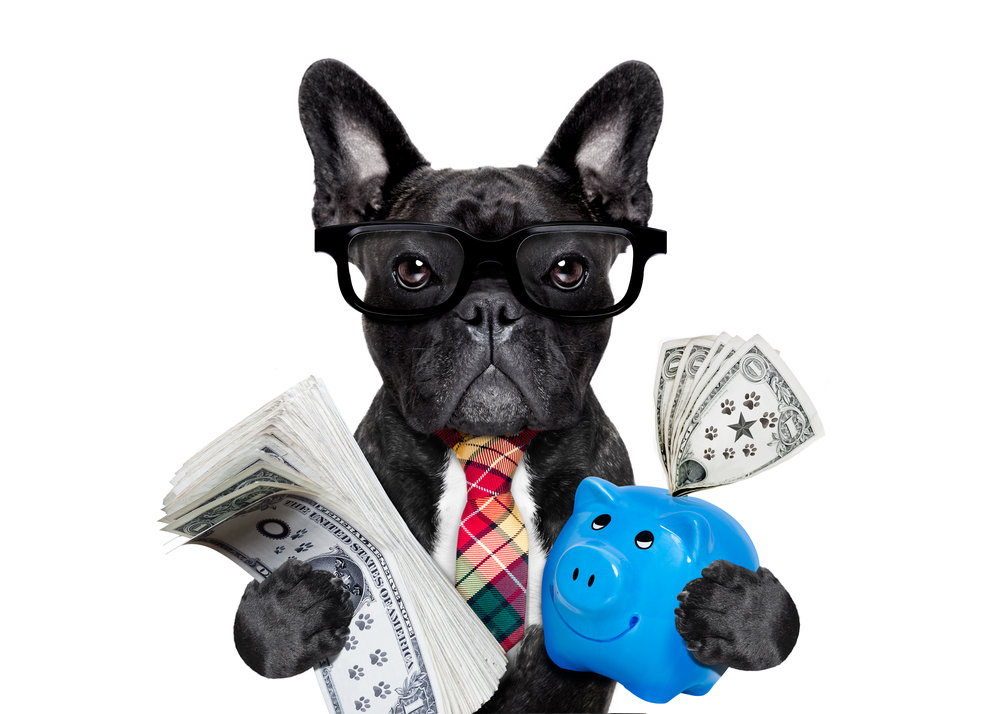 FrenchBullDog_ Banker.jpg