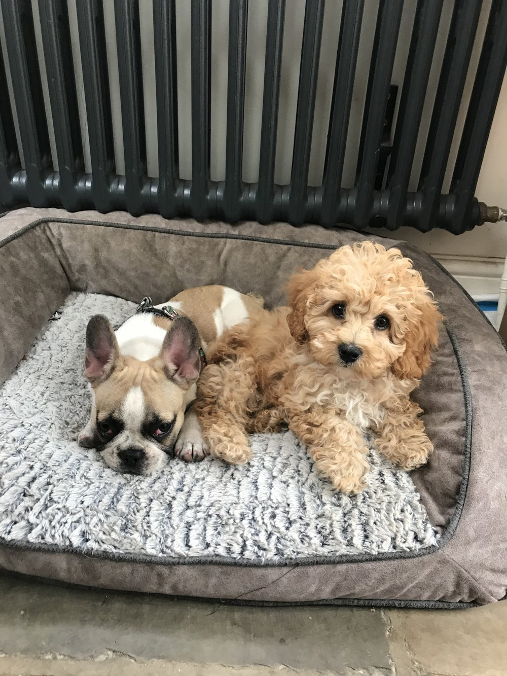 Puppies napping with their besties -  Juno and Agatha 12 weeks old