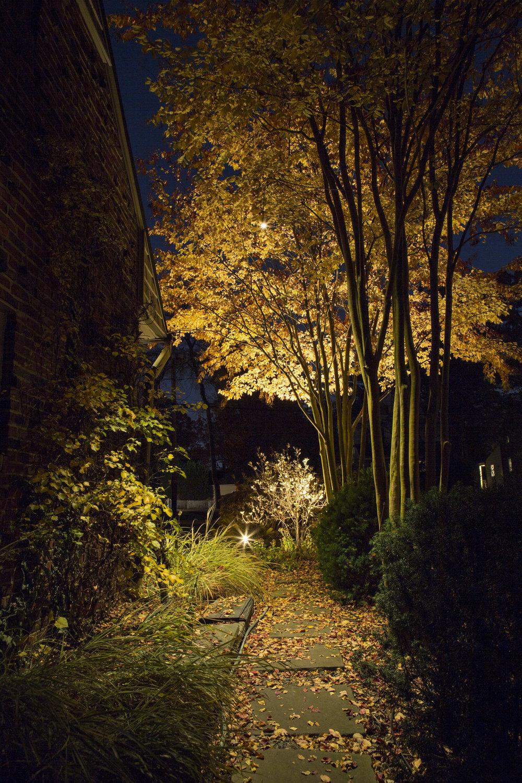 33298047213-autumn-forest-hideaway.jpg