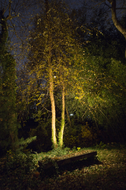 33266840324-autumn-forest-hideaway.jpg