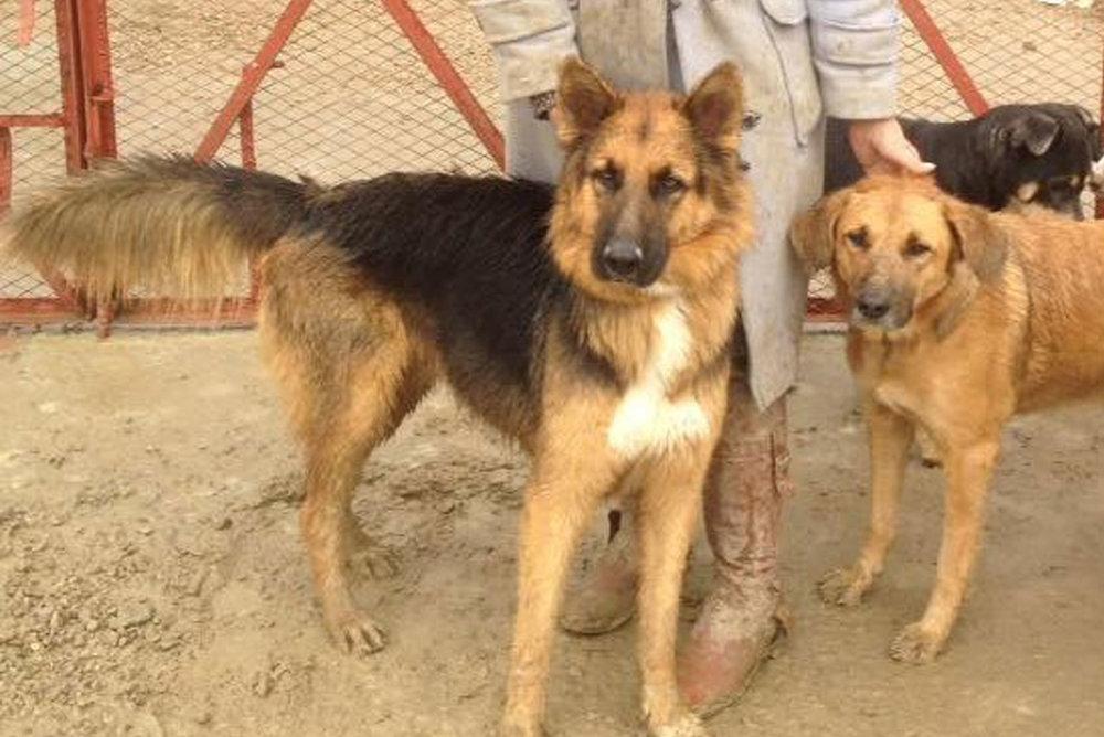 SFT_Adopt_Dogs_Profile_Storm_02.jpg