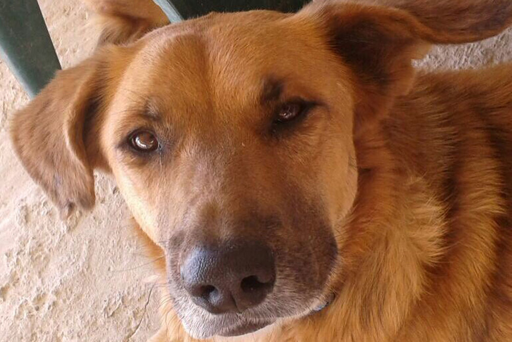 SFT_Adopt_Dogs_Profile_Terry_02.jpg