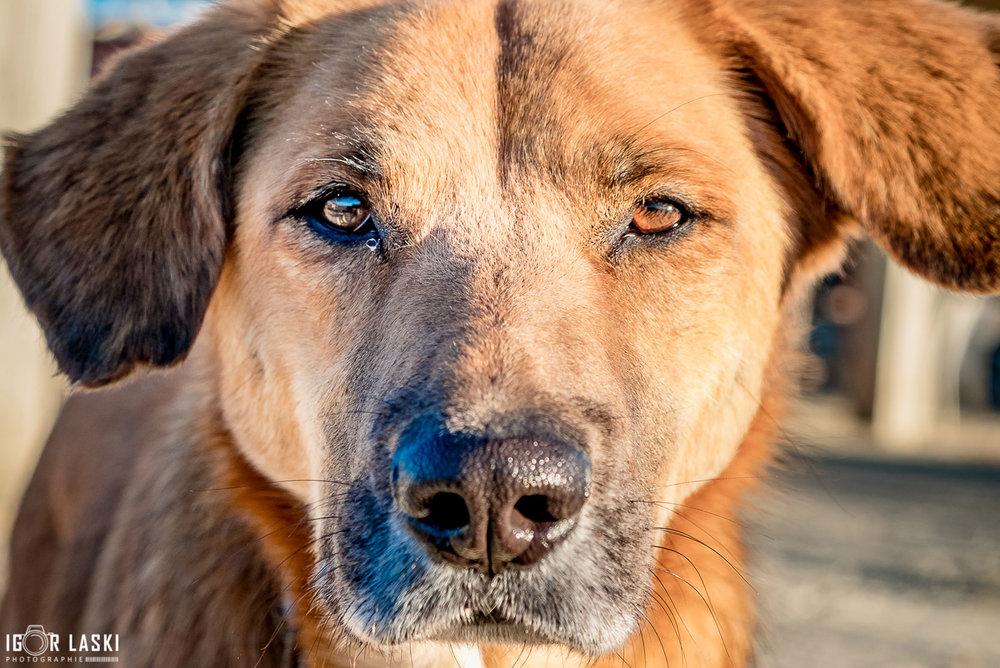 SFT_Adopt_Dogs_Profile_Terry_03.jpg