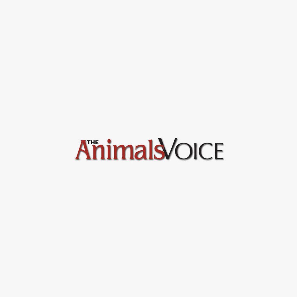 THE ANIMALS VOICE /  ENGLISH