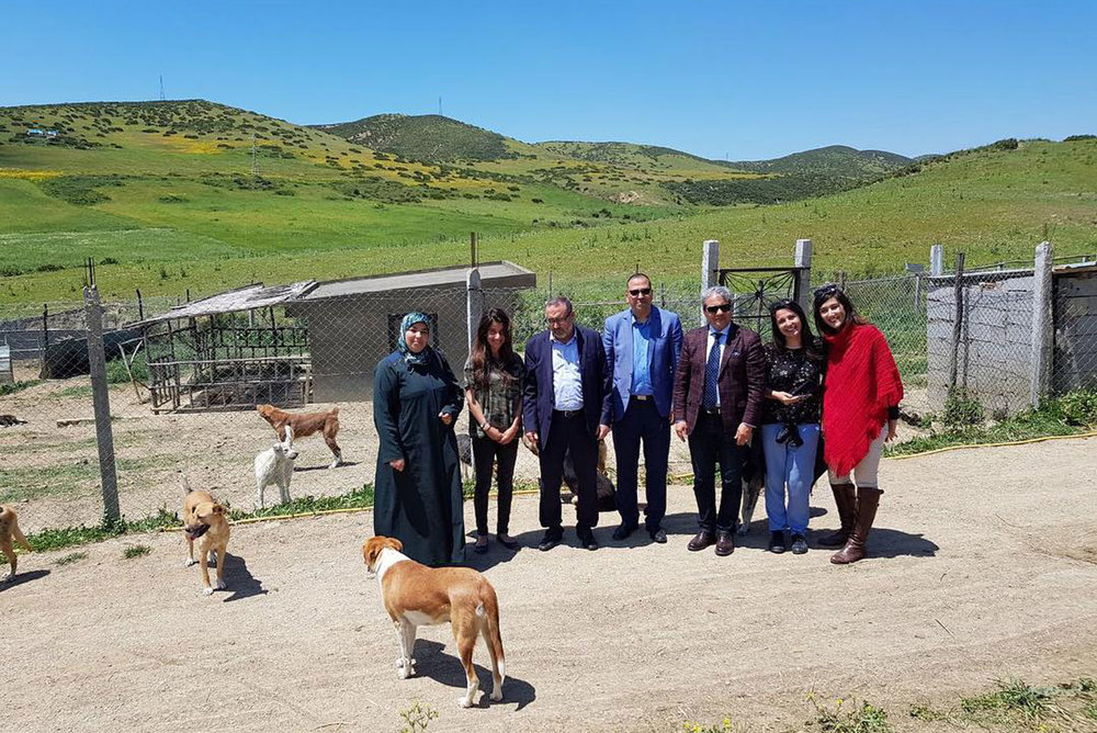 Today the Mayor of Tangier, honourable Mohamed Bachir Abdellaoui, and part of his team came to visit the sanctuary. They were very impressed!!! SFT is magical. We have amazing animals.