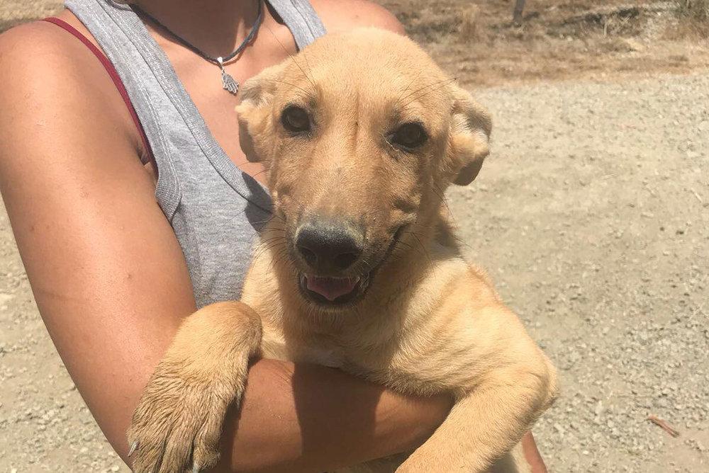SFT_Adopt_Dogs_Profile_Dipsy_01.jpg
