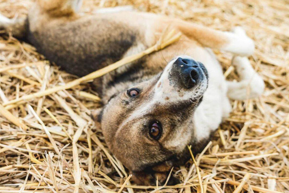 SFT_Adopt_Dogs_Profile_Bloom_01.jpg