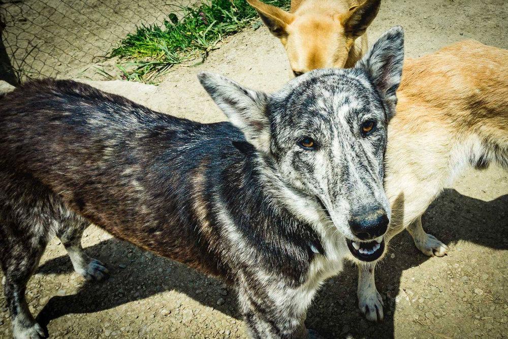 SFT_Adopt_Dogs_Profile_Chris_01.jpg
