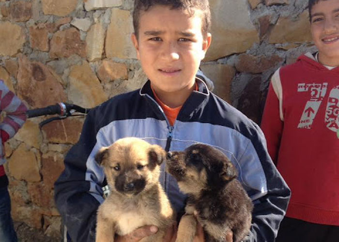 Boy&puppies.jpg