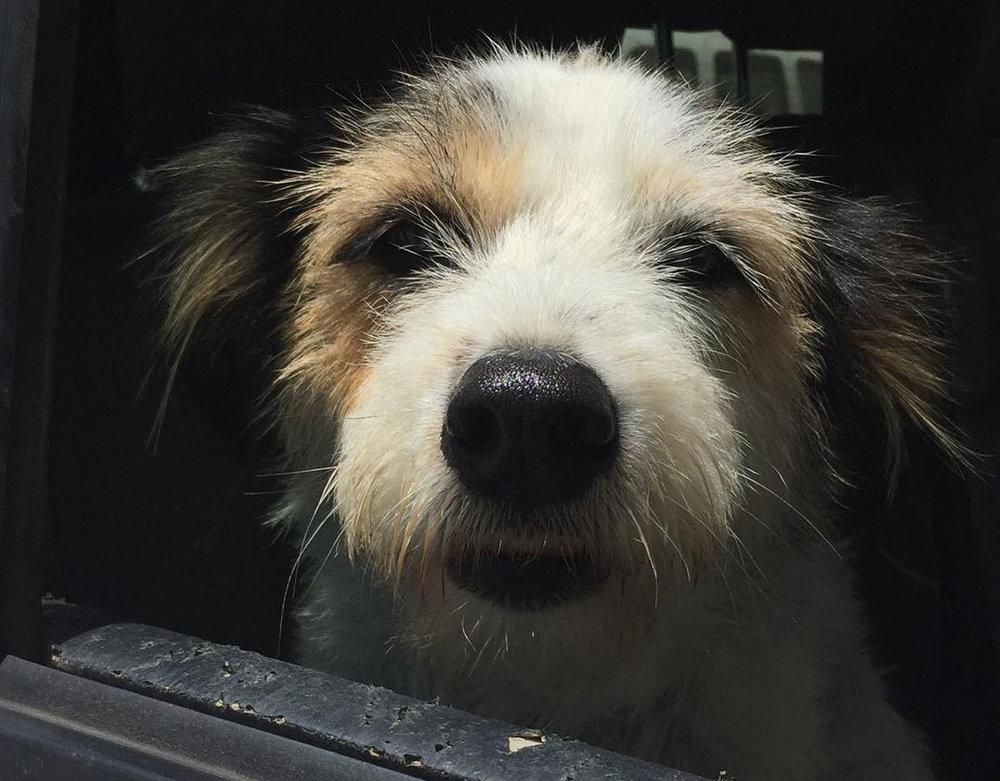 Lucky Puppy Sft Animal Sanctuary