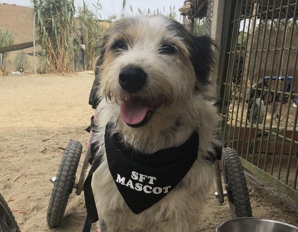 SFT_Sponsor_Profile_Lucky-Puppy_01.jpg