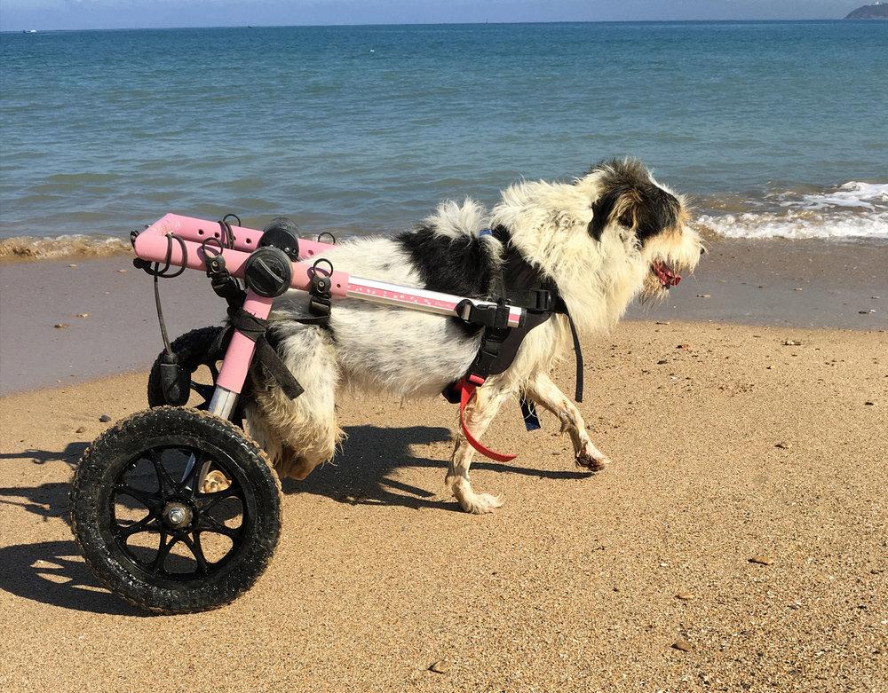 SFT_Sponsor_Profile_Lucky-Puppy_03.jpg
