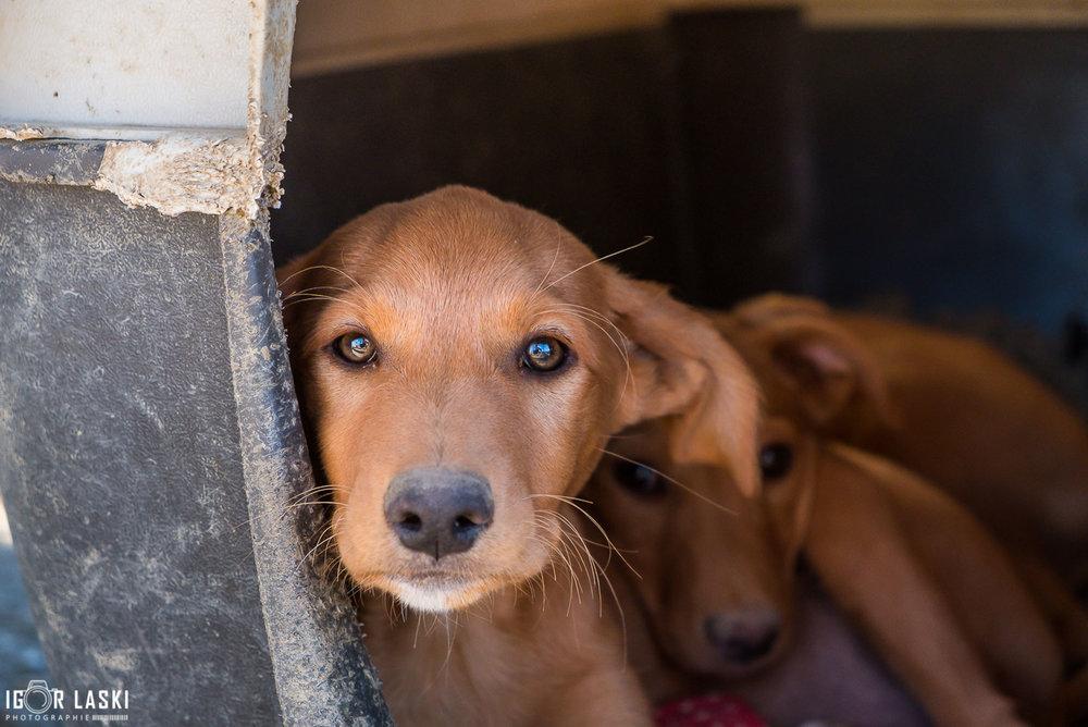 SFT_Adopt_Dogs_Profile_Go_02.jpg