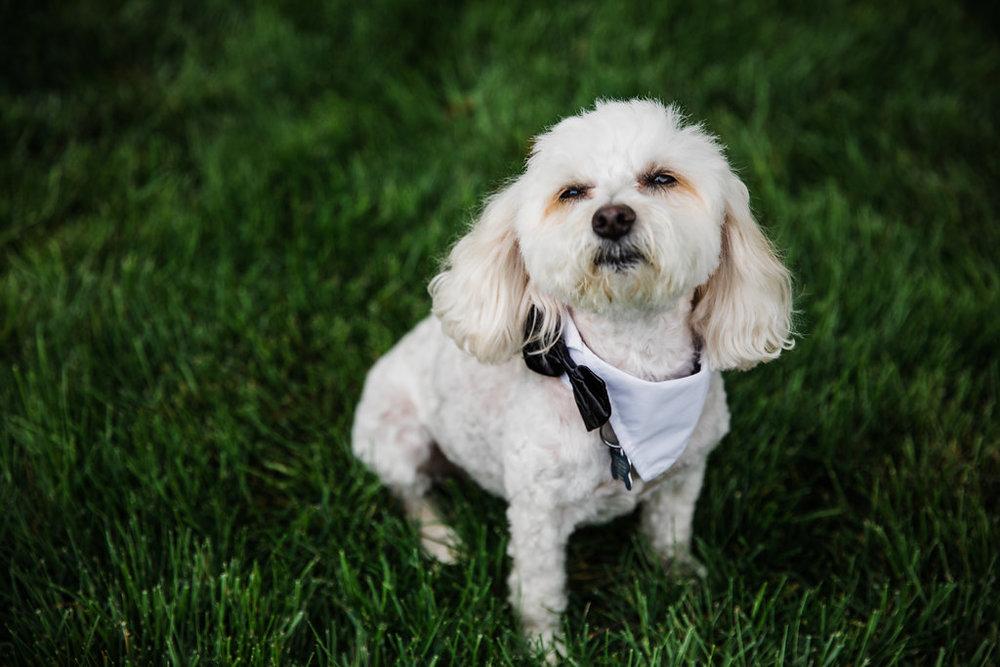 Dog of Honor Chicago Wedding Ella Farrell Weddings
