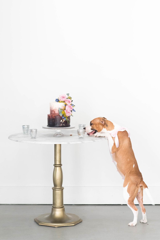 Puppy-Love-34.jpg