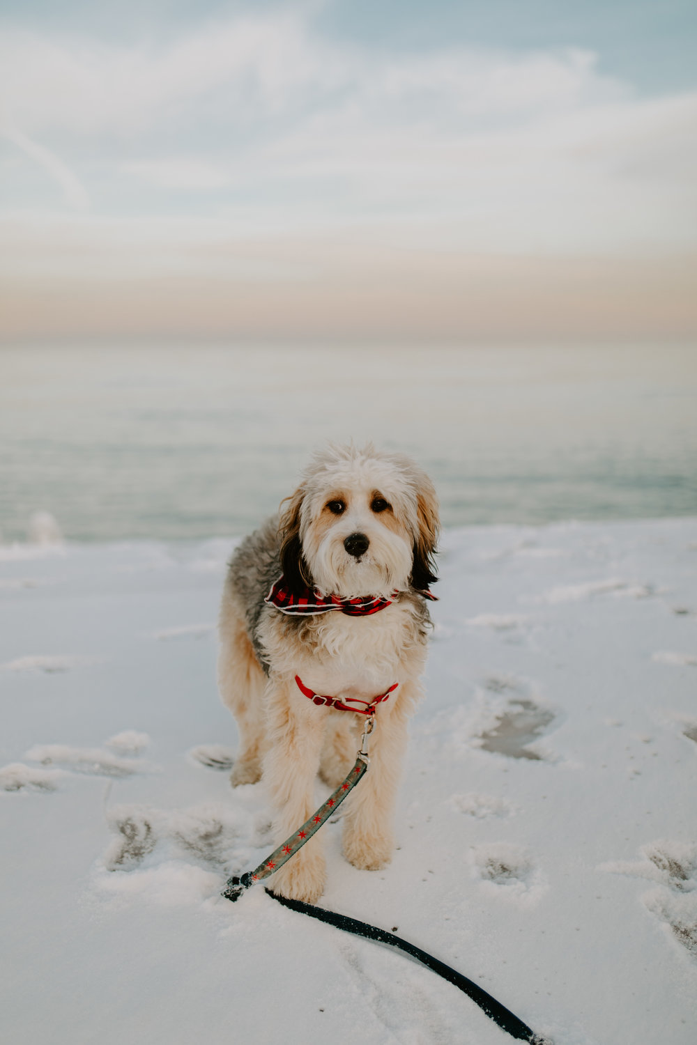 Puppy included in couple's winter engagement photo session with Chicago sunset at Chicago Lakefront, captured by Kerri Carlquist Photography. Find more inspiration at chitheewed.com!