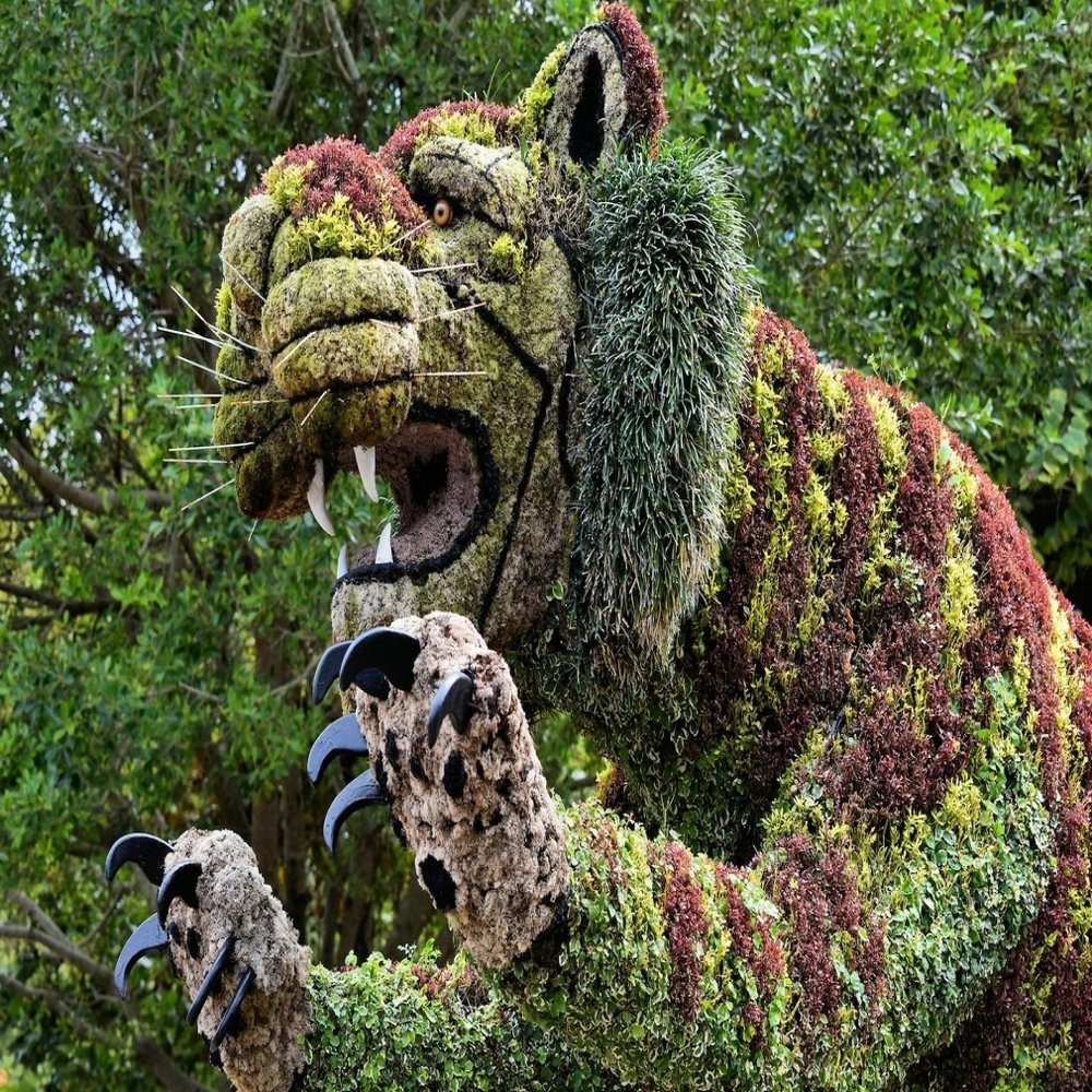 big-cat-bush-sculpture-at-busch-gardens-in-tampa-florida-encircle-within-the-complete-pictures-of-bush-gardens.jpg