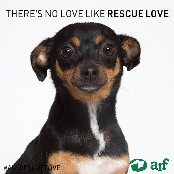 ARF-LOVE-Instagram-5.jpg