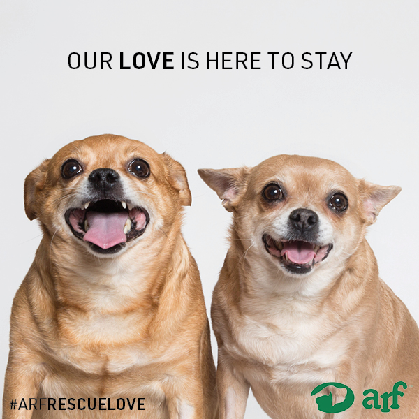 ARF-LOVE-Instagram-9.jpg