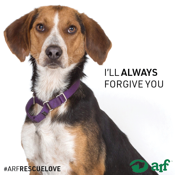 ARF-LOVE-Instagram-46.jpg