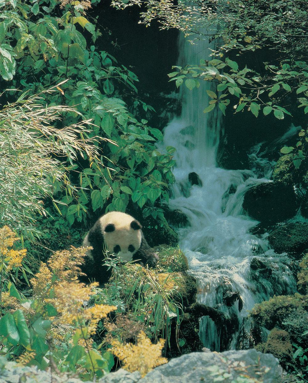 panda- Poto.jpg